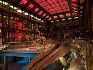 Die Grande Galerie de l'Evolution.