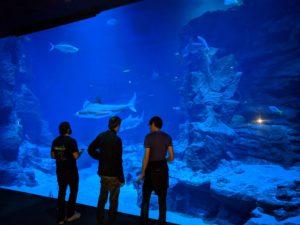 Phishing im Aquarium Mare Nostrum.