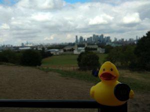 Eine Ente in Greenwich Park
