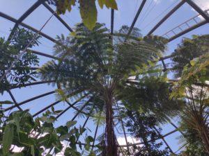 Tropenhaus im botanischen Garten der Universität Zürich.